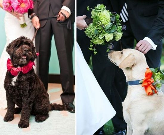 Pies na weselu
